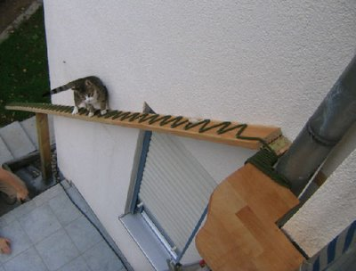 german-cat-ladder.jpg