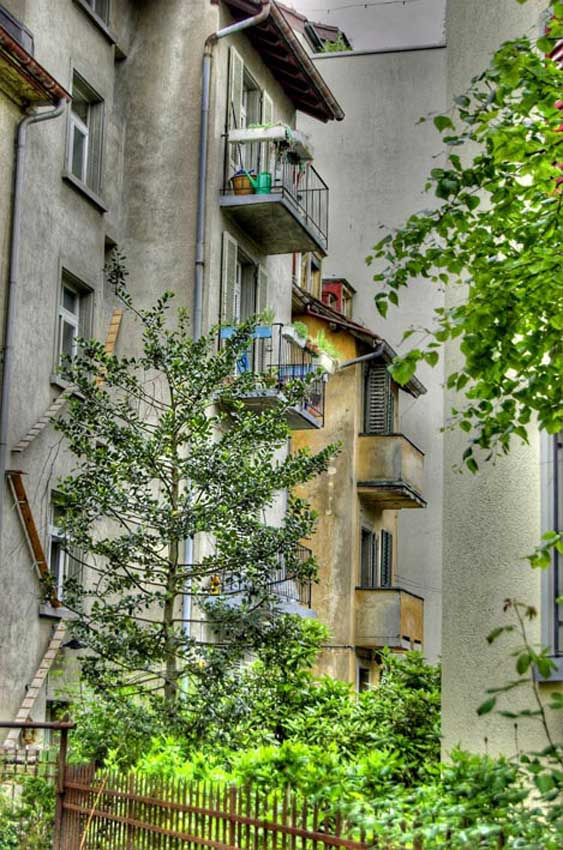zurich-switzerland-cat-ladder.jpg