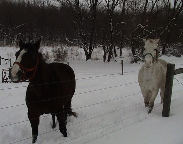 horses-in-the-snow.jpg